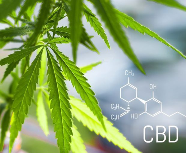 cannabis cbd1 1024x638 620x511 - Should You Invest In CBD?